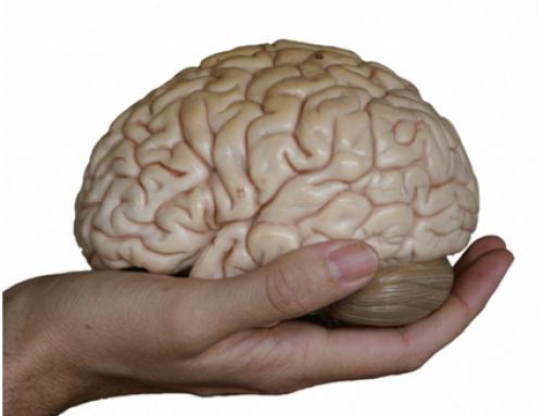 Com mantenir un cervell jove per a tota la vida