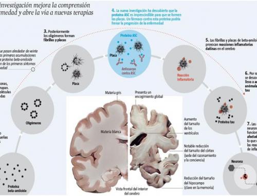 Descoberta una proteïna clau en l'alzheimer