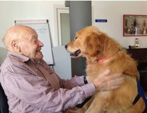 El Consorci Sociosanitari d'Igualada duu a terme teràpies amb gossos per la gent gran